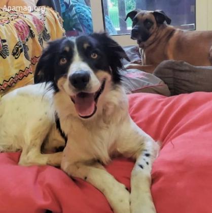 Maxcotea   Foto de Krai - Perro, Raza: Otro   Maxcotea, Adopción de mascotas. Adopción de perros. Adopción de gatos.