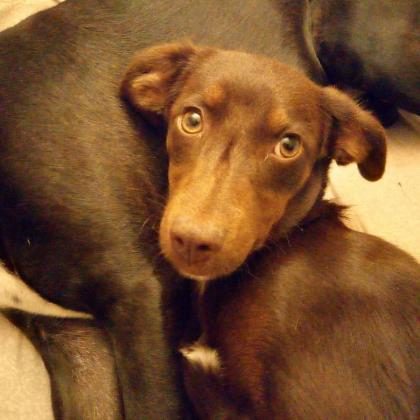 Maxcotea | Foto de Chloe - Perro, Raza: Otro | Maxcotea, Adopción de mascotas. Adopción de perros. Adopción de gatos.