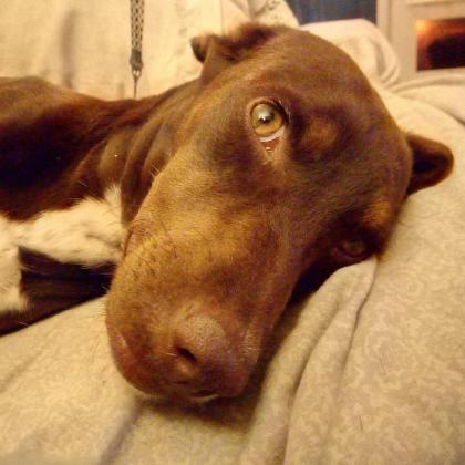 Maxcotea | Foto de Sofia - Perro, Raza: Otro | Maxcotea, Adopción de mascotas. Adopción de perros. Adopción de gatos.