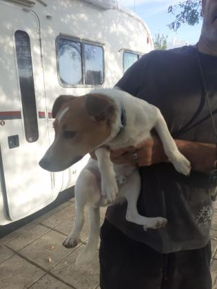 Maxcotea | Foto de Bubaloo - Perro, Raza: Otro | Maxcotea, Adopción de mascotas. Adopción de perros. Adopción de gatos.