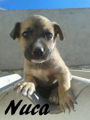 Maxcotea   Foto de NUCA - Perro, Raza: Otro   Maxcotea, Adopción de mascotas. Adopción de perros. Adopción de gatos.