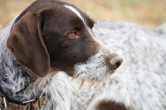 Maxcotea   Foto de Melina - Perro, Raza: Otro   Maxcotea, Adopción de mascotas. Adopción de perros. Adopción de gatos.