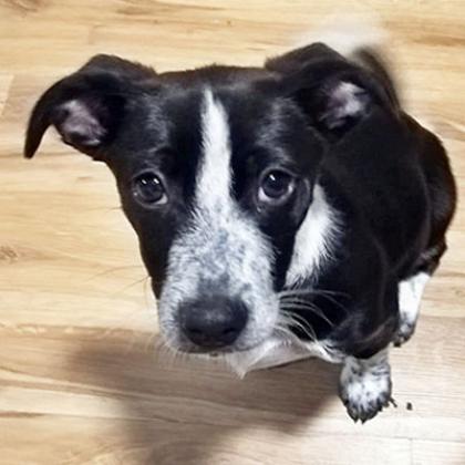 Maxcotea | Foto de Benji - Perro, Raza: Otro | Maxcotea, Adopción de mascotas. Adopción de perros. Adopción de gatos.