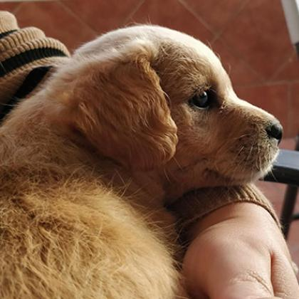 Maxcotea | Foto de Marylin - Perro, Raza: Otro | Maxcotea, Adopción de mascotas. Adopción de perros. Adopción de gatos.
