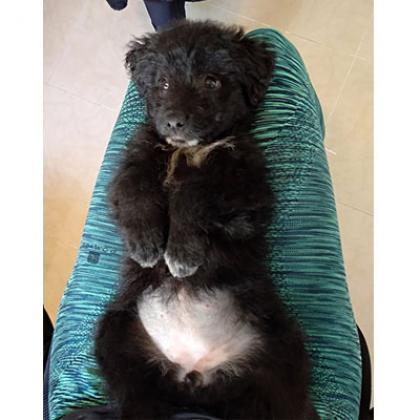 Maxcotea | Foto de Rosa - Perro, Raza: Otro | Maxcotea, Adopción de mascotas. Adopción de perros. Adopción de gatos.