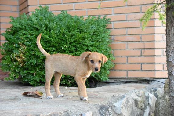 Maxcotea   Foto de Kira - Perro, Raza: Otro   Maxcotea, Adopción de mascotas. Adopción de perros. Adopción de gatos.