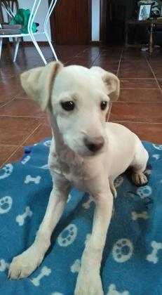 Maxcotea | Foto de Mayla - Perro, Raza: Otro | Maxcotea, Adopción de mascotas. Adopción de perros. Adopción de gatos.