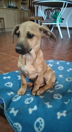 Maxcotea | Foto de Negu - Perro, Raza: Otro | Maxcotea, Adopción de mascotas. Adopción de perros. Adopción de gatos.