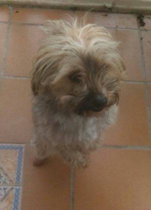 Maxcotea | Foto de HONEY - Perro, Raza: Otro | Maxcotea, Adopción de mascotas. Adopción de perros. Adopción de gatos.