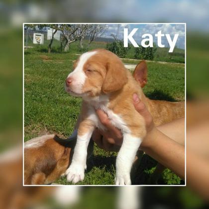 Maxcotea | Foto de Katy - Perro, Raza: Otro | Maxcotea, Adopción de mascotas. Adopción de perros. Adopción de gatos.