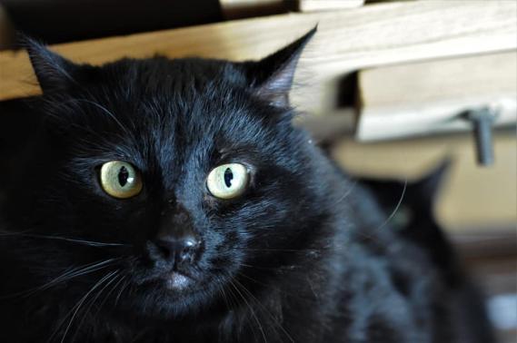Maxcotea | Foto de HERMES EN ADOPCION - Gato, Raza: Otro | HERMES EN ADOPCION | Maxcotea, Adopción de mascotas. Adopción de perros. Adopción de gatos.
