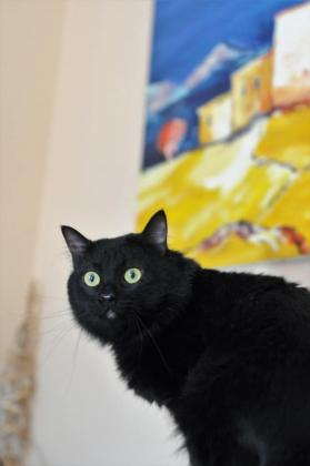 Maxcotea | Foto de HEFESTOS EN ADOPCION - Gato, Raza: Otro | Maxcotea, Adopción de mascotas. Adopción de perros. Adopción de gatos.