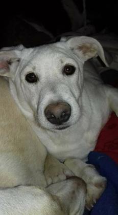 Maxcotea | Foto de Lenny - Perro, Raza: Otro | Maxcotea, Adopción de mascotas. Adopción de perros. Adopción de gatos.