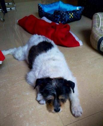 Maxcotea | Foto de Groucho - Perro, Raza: Otro | Maxcotea, Adopción de mascotas. Adopción de perros. Adopción de gatos.