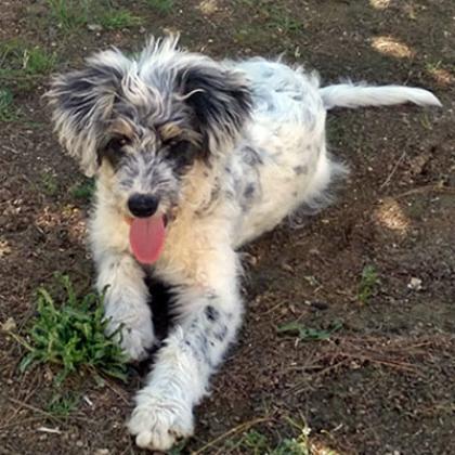 Maxcotea | Foto de Baxter  - Perro, Raza: Otro | Maxcotea, Adopción de mascotas. Adopción de perros. Adopción de gatos.