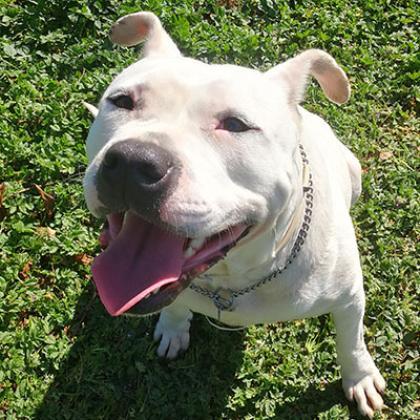 Maxcotea | Foto de Alba - Perro, Raza: Otro | Maxcotea, Adopción de mascotas. Adopción de perros. Adopción de gatos.