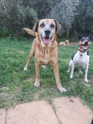 Maxcotea | Foto de Xica - Perro, Raza: Otro | Maxcotea, Adopción de mascotas. Adopción de perros. Adopción de gatos.