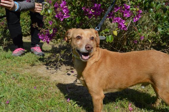 Maxcotea | Foto de Reggea - Perro, Raza: Otro | Maxcotea, Adopción de mascotas. Adopción de perros. Adopción de gatos.