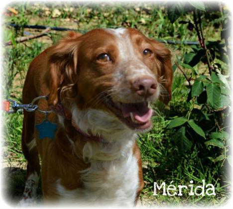 Maxcotea | Foto de Merida - Perro, Raza: Otro | Maxcotea, Adopción de mascotas. Adopción de perros. Adopción de gatos.