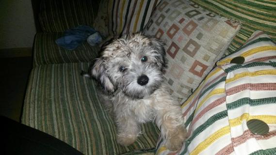 Maxcotea | Foto de Txato - Perro, Raza: Otro | Maxcotea, Adopción de mascotas. Adopción de perros. Adopción de gatos.