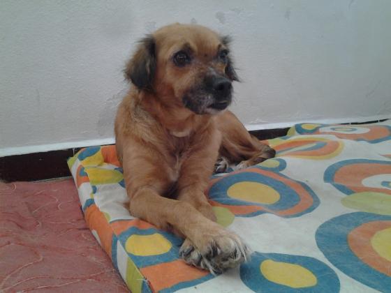 Maxcotea | Foto de Guadi - Perro, Raza: Otro | Maxcotea, Adopción de mascotas. Adopción de perros. Adopción de gatos.