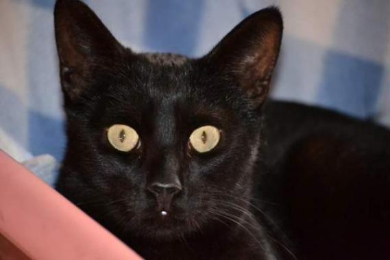 Maxcotea | Foto de Lilo - Gato, Raza: Otro | Maxcotea, Adopción de mascotas. Adopción de perros. Adopción de gatos.
