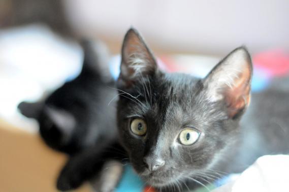 Maxcotea | Foto de BLAI EN ADOPCION - Gato, Raza: Otro | Maxcotea, Adopción de mascotas. Adopción de perros. Adopción de gatos.