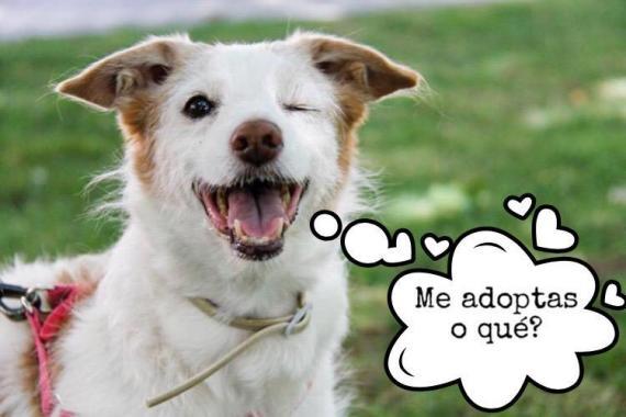 Maxcotea | Foto de Nani - Perro, Raza: Otro | Maxcotea, Adopción de mascotas. Adopción de perros. Adopción de gatos.