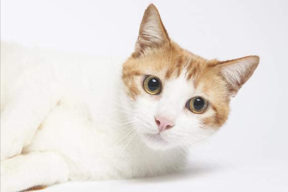 Maxcotea | Foto de comic - Gato, Raza: Otro | Comic ,lo mas bueno del mundo | Maxcotea, Adopción de mascotas. Adopción de perros. Adopción de gatos.